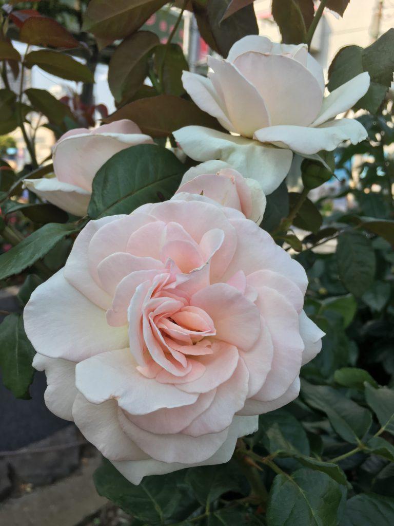 【Kumiko 's blog】6月の予定(^^)