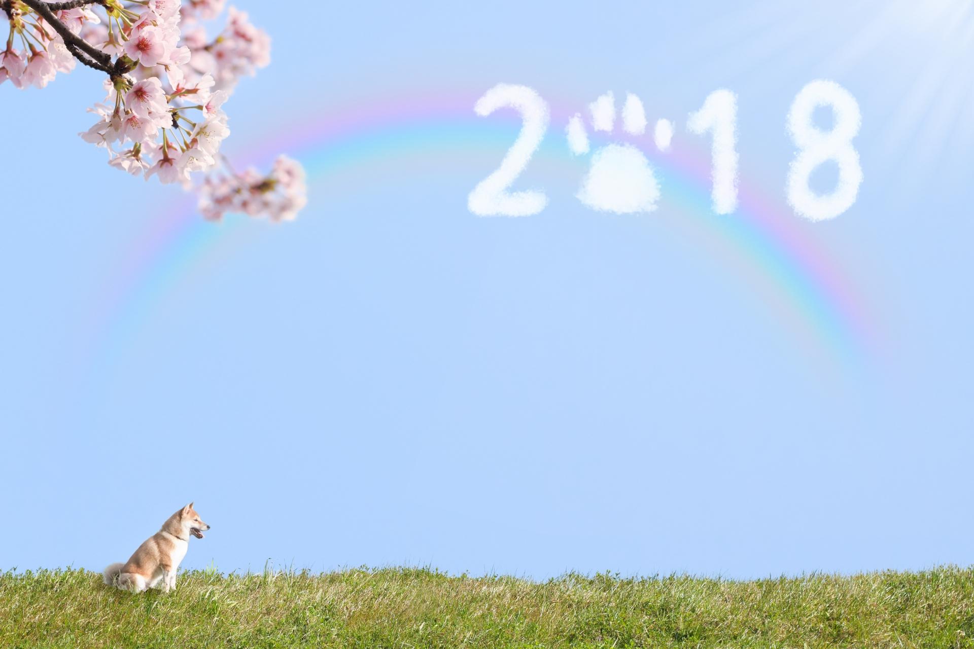 【Toco's blog】1月はわっしょいレッスン割引中☆